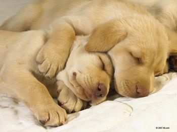 3102975_1024x768おやすみ犬.jpg